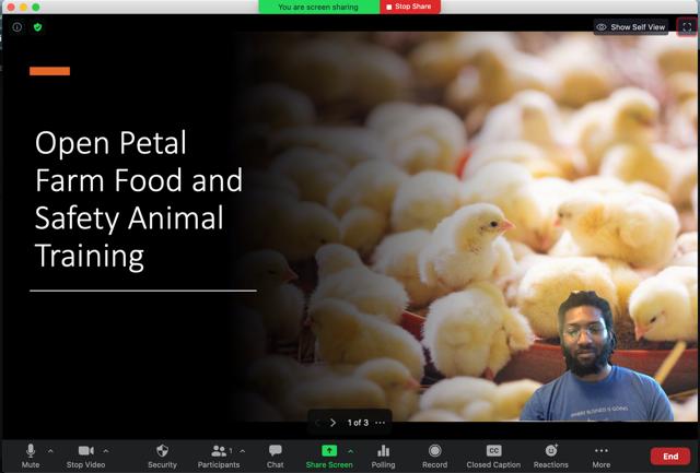 Sau khi nhập bản trình bày, trang chiếu sẽ được hiển thị làm nền ảo của bạn. Nếu bạn đang bật video thì video sẽ được chèn lên trang chiếu theo mặc định.